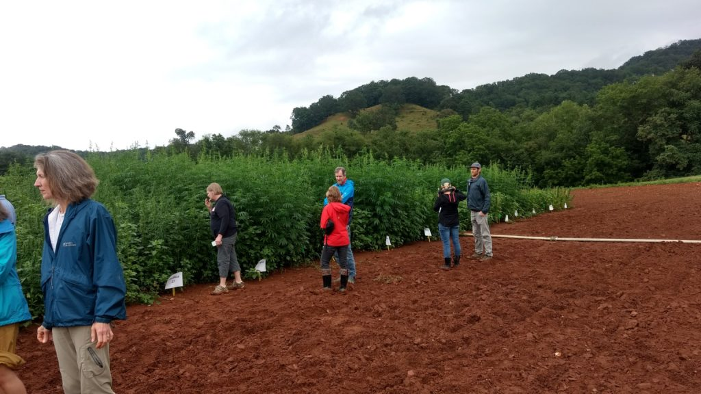 Group visiting industrial hemp field trials at field day