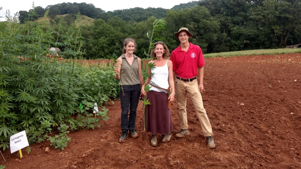 Three Industrial Hemp researchers showing the differences in root development in two hemp varieties