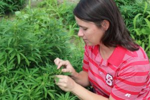 Image of woman looking at hemp plant