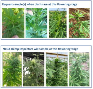Cover photo for Hemp Flower Testing for THC