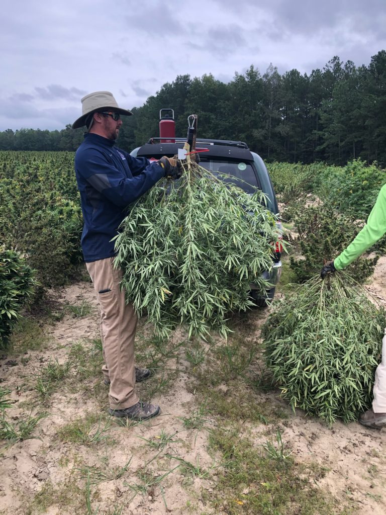 Research Technician Jonathan Moore weighing hemp in Johnston County NC.